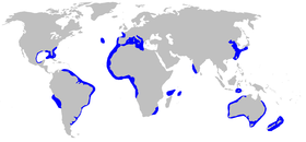 Range of the sharpnose sevengill shark