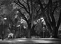 Hesperiapark monocolor autumn.jpg