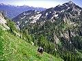 Hiker mountain backpacker slope flowers scenic BBaccus NPS photo (22938921381).jpg