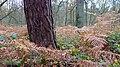 Hildener Stadtwald. Reader-1.jpg