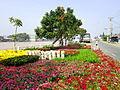 Hoa ở Tân Quy Đông 2.jpg