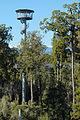 Hokitika Tower at Treetop Walkway amongst mature rimu trees of surrounding forest.jpg
