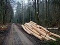 Holzeinschlag bei Gärtringen - panoramio.jpg