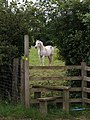 Horse and stile - geograph.org.uk - 490142.jpg