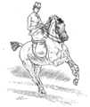 Horsemanship for Women 094.png