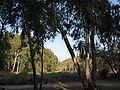 Horshim wood025.jpg