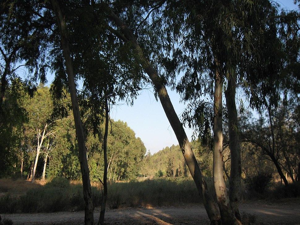 Horshim wood025