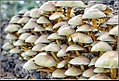 How many mushrooms do you want? (10086021755).jpg