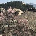 Huayin, Weinan, Shaanxi, China - panoramio (5).jpg