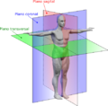 Human anatomy planes-EScor.png