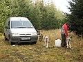 Huskies in Kershope Forest - geograph.org.uk - 683447.jpg