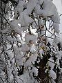 Ice covered the alpines.jpg