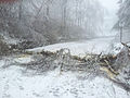 Ice damage, December 2014-3.jpg