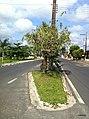 Iguape - SP - panoramio (104).jpg