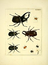 Illustrations of natural history (Pl. XXXVI) (8119077306).jpg