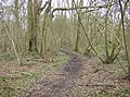 In Bushnells Green copse - geograph.org.uk - 350969.jpg