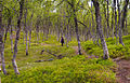 In the forest (Tromsø, Norway).jpg