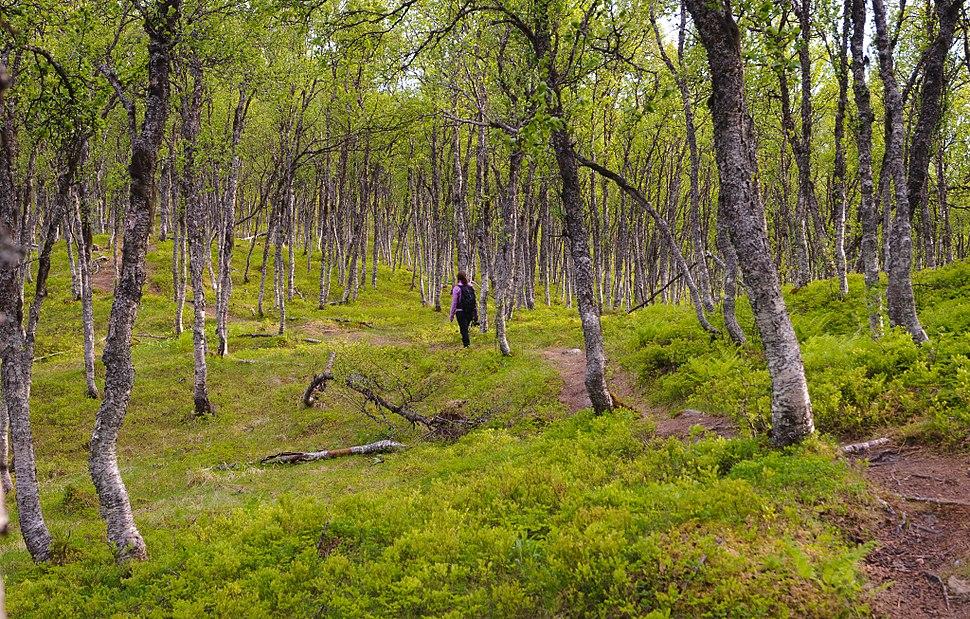 In the forest (Tromsø, Norway)