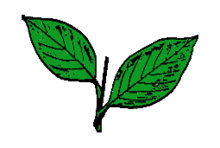 Hinda Election Symbol Two Leaves.png