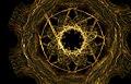 Interconexion apophysis fractal frame.jpg