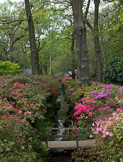 Isabella Plantation woodland and garden in Richmond Park, London