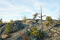 Jack Pine on the Yellowknife greenstone belt, Canada 1.jpg