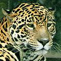 Jaguar X.jpg