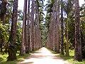 Jardim Botânico - panoramio (1).jpg