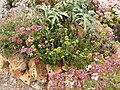 Jardin botanique - Planète pelargonium 4.JPG