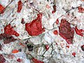 Jasper-quartz pebble conglomerate (Lorrain Formation, Paleoproterozoic, ~2.3 Ga; Ottertail Lake Northeast roadcut, near Bruce Mines, Ontario, Canada) 69 (47709592711).jpg