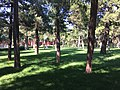 Jingshan Park IMG 4371.jpg