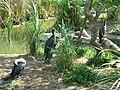 Jurong BirdPark 185.JPG