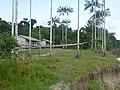 Jutaí - State of Amazonas, Brazil - panoramio (43).jpg