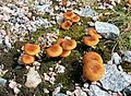 Jyväskylä - fungi 2.jpg