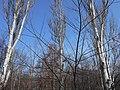 Khimselyshche, Cherkasy, Cherkas'ka oblast, Ukraine - panoramio (186).jpg
