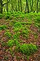 Killarney Forest - HDR (10376763585).jpg