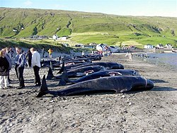 FAROE ISLANDS - Wikipedia, the free encyclopedia