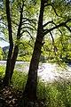 Klamath River (28310045235).jpg