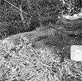 """Korenmolen """"De Dankbaarheid"""", maalstenen in de molenwerf gegraven - Herkingen - 20108930 - RCE.jpg"""