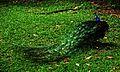 Kula lumpur (26).jpg