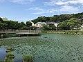 Kumanokoshiike Pond 20170712-5.jpg
