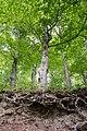 Lügde - 2015-05-29 - LIP-064 (16).jpg