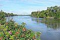 La Loire à Saint-Jean-de-la-Croix (14928949267).jpg