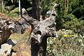 La Palma - Los Llanos - Carretera a Puerto Naos - Parque Antonio Gómez Felipe (Morera) 43 ies.jpg