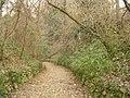 La strada nel bosco.jpg
