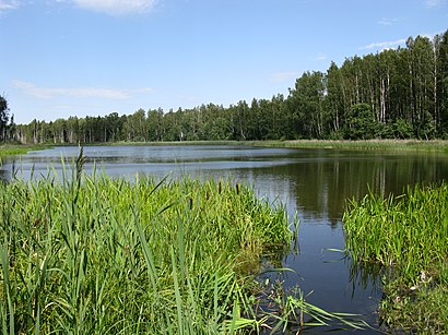 How to get to Vasula Järv with public transit - About the place