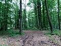 Landschaftsschutzgebiet Strothheide Melle Datei 21.jpg