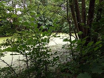 Landschaftsschutzgebiet Warmenau-Ufer LSG OS 00019 Datei 41.jpg