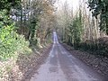 Lane through the woods at Hatfield Court - geograph.org.uk - 1052853.jpg