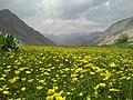 Lar plain near Astarkolak,Lar river گل زرد چمنی استر کلک - panoramio.jpg